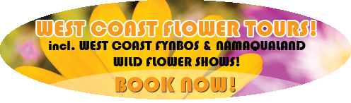 West Coast Flower Tours, incl. Namaqualand Flower Shows!